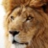 Mac OS X Lion Skin for Windows 7 Icon