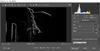 Adobe Camera Raw - 4