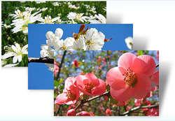 Czech Spring Theme for Windows 7 Screenshot