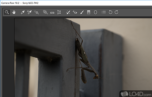 Camera Raw for Photoshop Screenshot